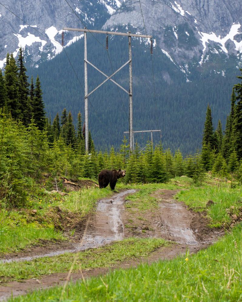 캐나다 브리티시컬럼비아의 교란된 불곰 서식지. 연결된 야생 서식지가 멀리 보인다. 클레이턴 램 제공