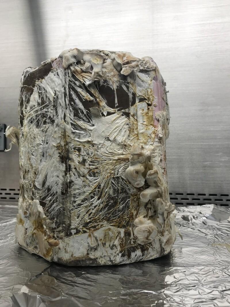 균사체를 2주간 배양해 만든 초보 형태의 스툴 의자. 나사 제공