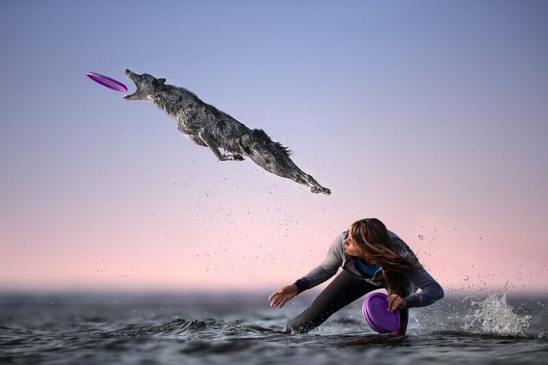 원반을 물어라. 2nd Place / Oneshot : Movement/Nature/Claudio Piccoli/IPA