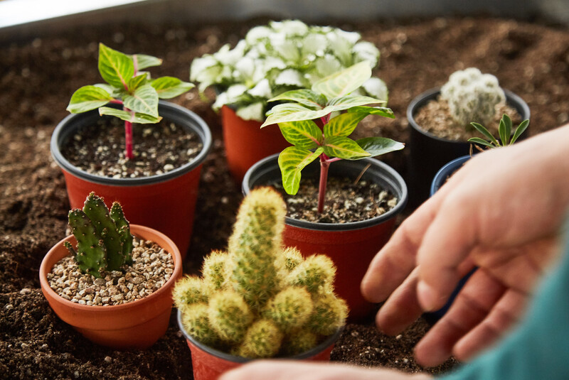 [ESC] 커피 찌꺼기, 셀로판지, 선풍기로 식물 키워봐요!