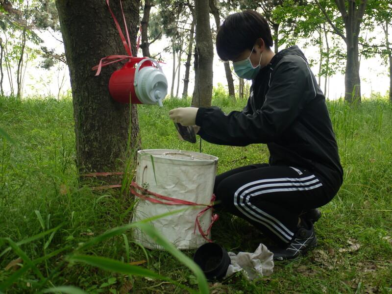지난 8일 조세훈 고신대학교 기후변화 매개체 감시거점센터 연구원이 부산 을숙도 생태공원에 설치된 흰줄숲모기 트랩에서 모기를 채집하고 있다.