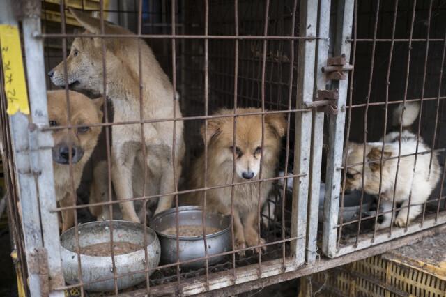 충남의 한 개농장에 개들이 갇혀 있다. 한겨레 자료사진
