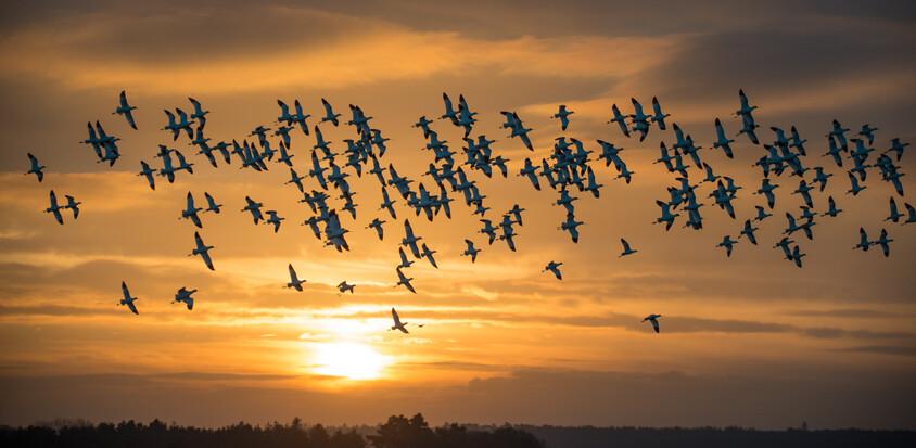 우리가 모르는 지구의 보물, 새들은 안다