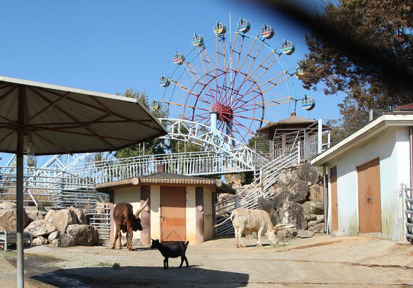 한국에서 동물원은 위락 시설에 불과하다. 청각이 예민한 동물이 놀이공원의 지속적인 소음에 노출되는 모습. 어웨어 제공