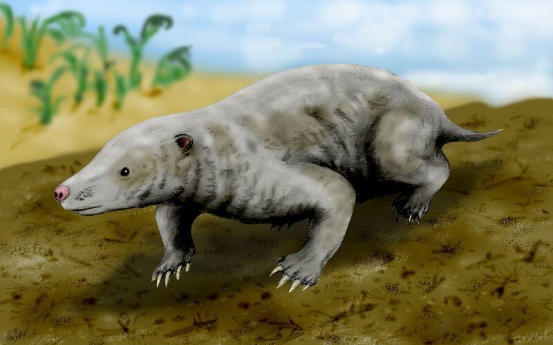 쥐라기 포유류의 일종인 프루이타포소르. 다람쥐 크기로 흰개미를 잡아먹고 살았을 것으로 추정된다. 위키미디어 코먼스 제공