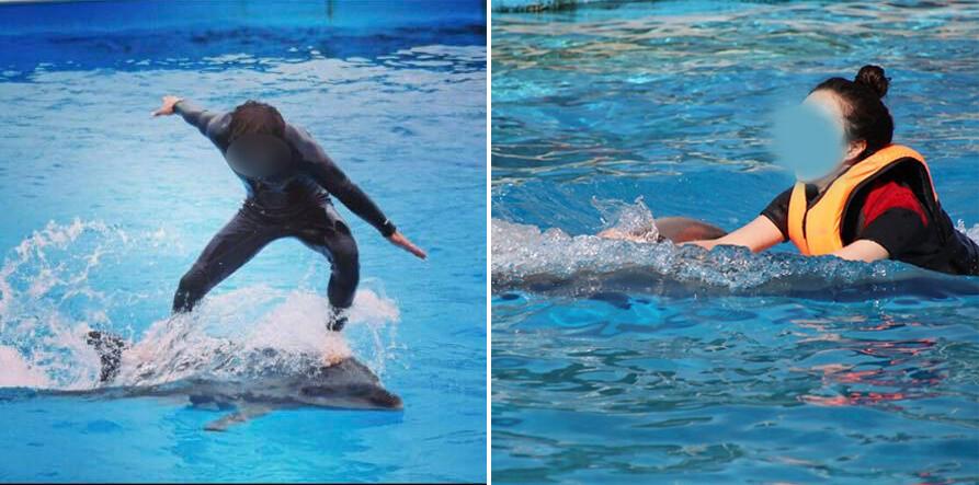 경남 거제의 돌고래 체험시설 '거제씨월드'가 돌고래를 타는 프로그램을 운영해 온 사실이 알려지며 동물학대 논란에 휩싸였다.