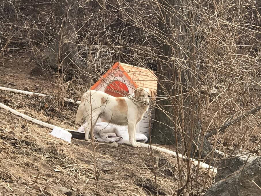 현재 비구협 포천쉼터 주변에는 근처를 맴돌며 포획되지 않는 유기견 20여 마리가 살고 있다. 김지숙 기자 suoop@hani.co.kr