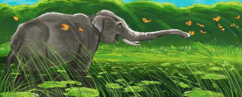 출산전 코끼리는 어찌 알고 분만촉진 풀을 찾아먹나