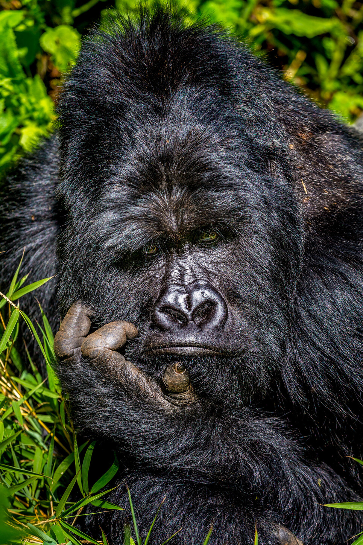 © Marcus Westberg/The Comedy Wildlife Photography Awards 2020