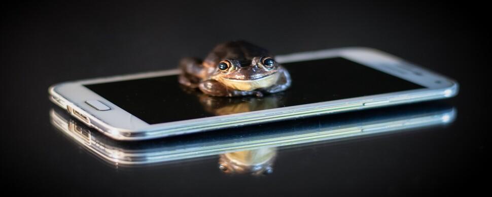 외딴 연못 개구리, 휴대폰 한 통으로 '조사 끝'