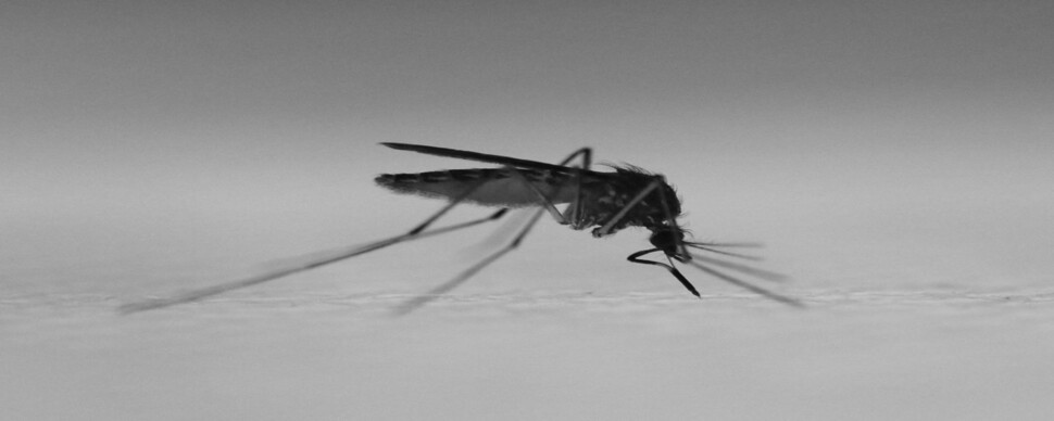 모기, 물리긴 해야는데 물릴 순 없어서…인공 피부 개발