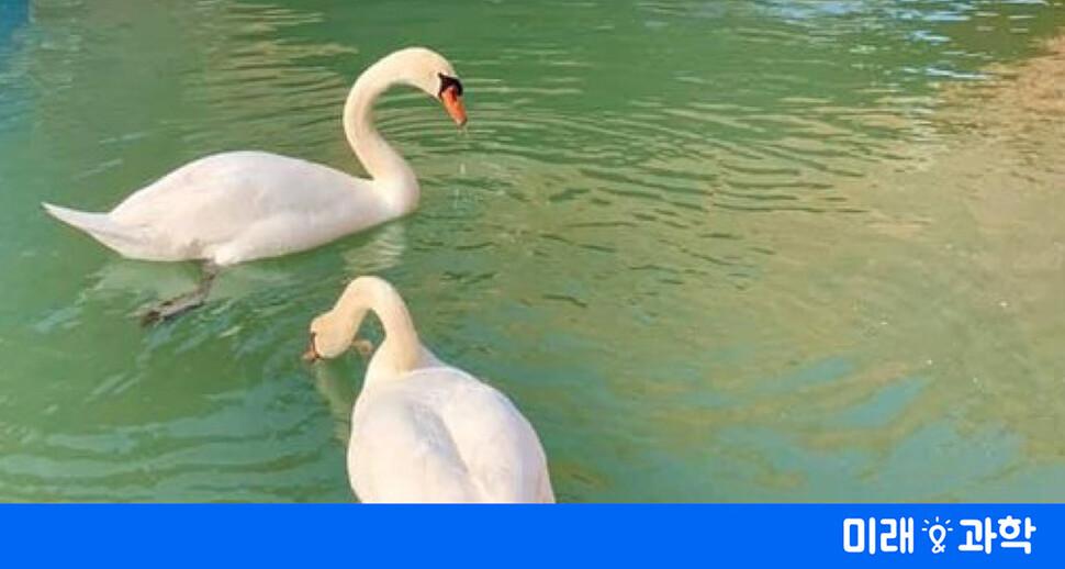 """""""베네치아 찾은 백조와 돌고래""""는 가짜뉴스"""