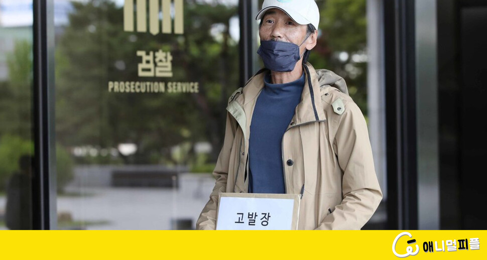"""""""고양이로 불법 실험""""…비글구조네트워크, 서울대병원 고발"""