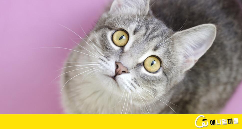 고양이는 왜 '세로 눈동자'일까?