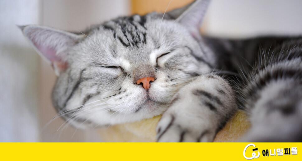 고양이는 왜 잠만 잘까?