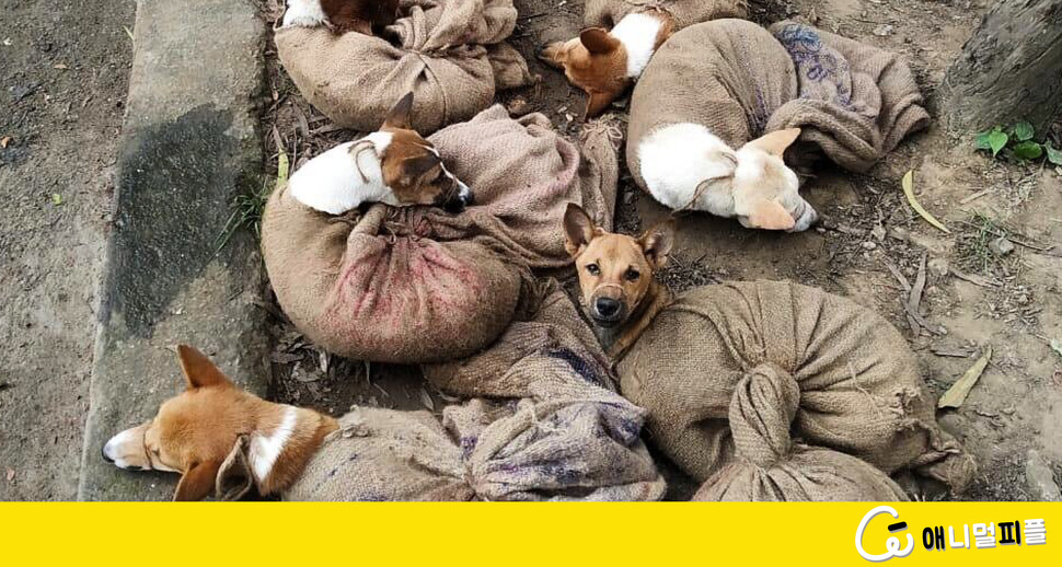 포대 자루에 끌려가던 개가 친구들을 살렸다