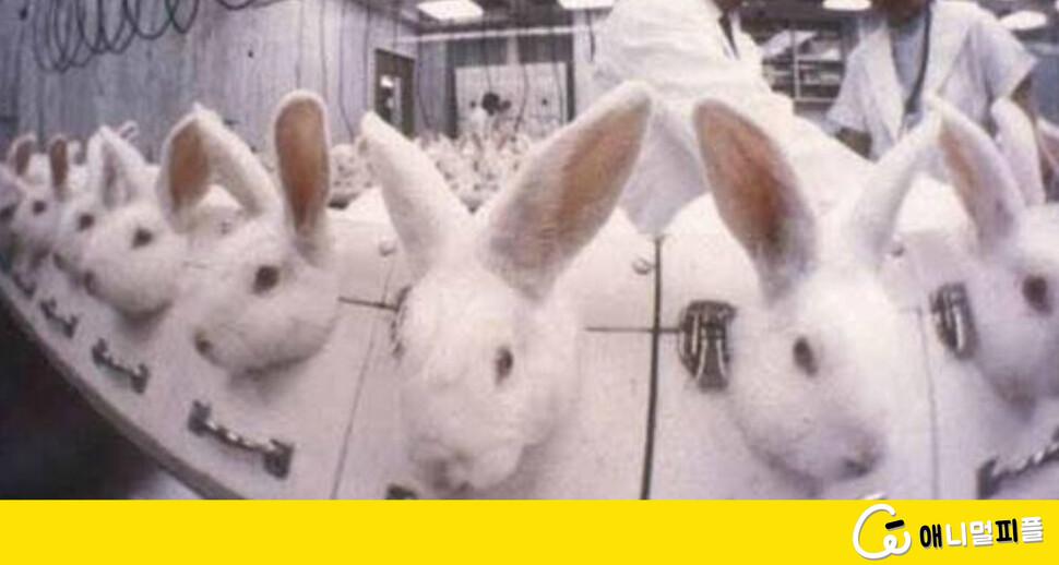 콘돔, 생리컵…우리가 미처 알지 못했던 '토끼의 희생'