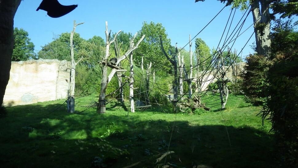 독일 라이프치히동물원의 침팬지 사육장. 자연 서식지와 가까운 시설에 다양한 구조물로 구성되어 있다. 침팬지는 보이지 않는다. 21세기형 동물원의 특징은 동물이 사람의 시선에 언제나 노출되지 않는다는 것이다. 어웨어 제공