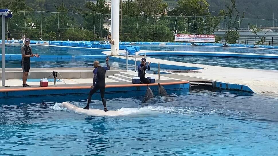 지난 27일 핫핑크돌핀스가 모니터링한 거제씨월드 돌고래쇼. '돌고래 서핑' 논란 뒤에도 같은 체험과 쇼를 이어가고 있었다. 핫핑크돌핀스 제공