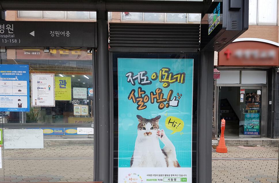 서대문구 길고양이 동행본부는 지난 2018년부터 서대문구 내 버스정류장, 마을버스 등에 길고양이 인식개선 광고를 진행해오고 있다. 서동행 제공