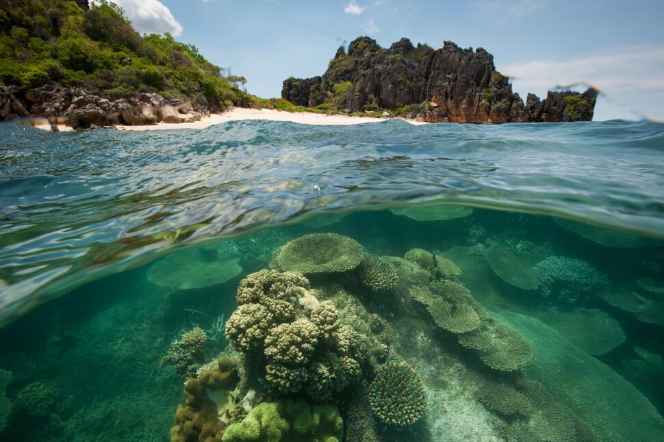 마다가스카 노시하라 해양공원의 산호초. WWF '지구의 미래' 보고서는 홍수와 폭풍, 해수면 상승의 영향으로 매년 3270억 달러의 손실을 볼 수 있다고 내다봤다. © Nick Riley WWF-Madagascar (세계자연기금)