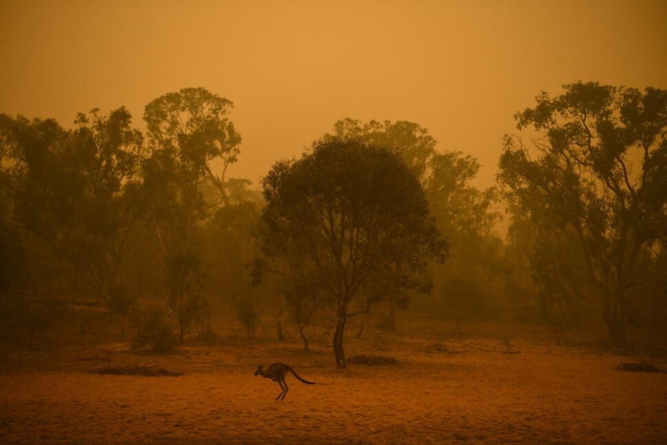 캥거루 한마리가 5일 오전(현지시각) 오스트레일리아 캔버라에서 연기가 피어오르는 수풀 앞을 뛰어가고 있다. 캔버라/EPA 연합뉴스