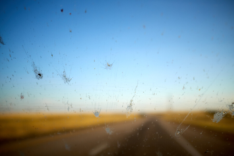 자동차 앞유리에 부닥쳐 들러붙은 곤충 사체들. 얼마나 많은 곤충과 충돌하는지 장기간 측정하면 곤충의 양이 어떻게 변하는지 알 수 있다. 게티이미지뱅크