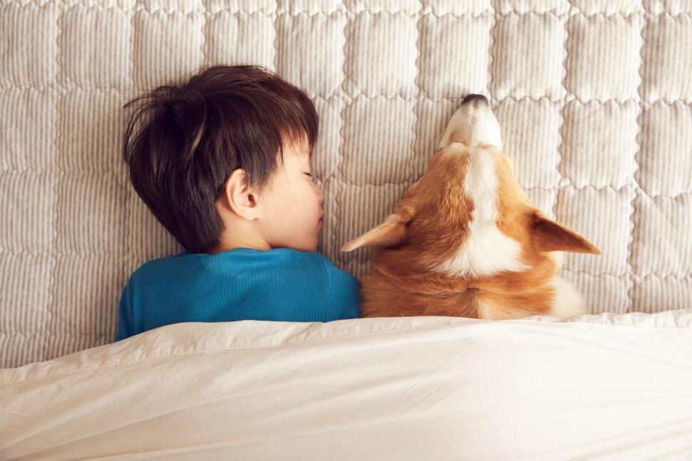 서로 다른 종이 어떻게 우정을 쌓는지는 수수께끼인 부분이 많다. 이것을 완전하게 이해하기 위해선, 개가 인간에게 어떻게 길들여졌는지 탐구해야 한다고 과학자들은 지적한다. 클립아트이미지 코리아 제공