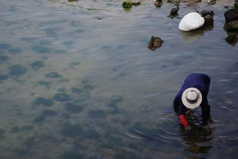 충남 장고도에서는 해산물 채취로 얻는 수익을 주민들에게 배당하는 기본소득 실험이 진행 중이다. 강제윤 섬연구소 소장 제공