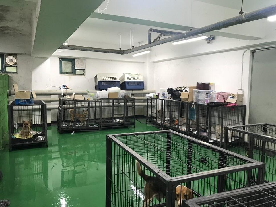 지난 8월10일 애피가 찾은 경북대 수의과대학 지하 사육실에는 5마리의 암컷 믹스견과 4마리의 실험용 비글견이 사육되고 있었다.