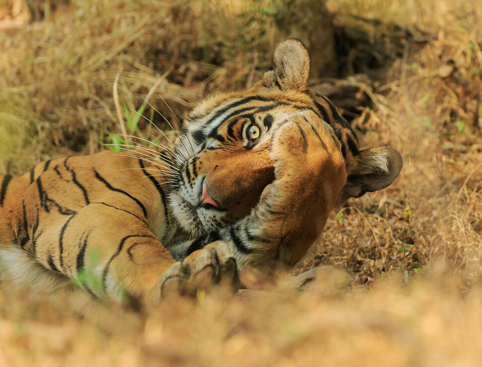 © Jagdeep Rajput/The Comedy Wildlife Photography Awards 2020
