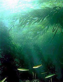 해조류의 숲 (셀틱의 숲).  유지 에반스 위키 미디어 공용 스 제공