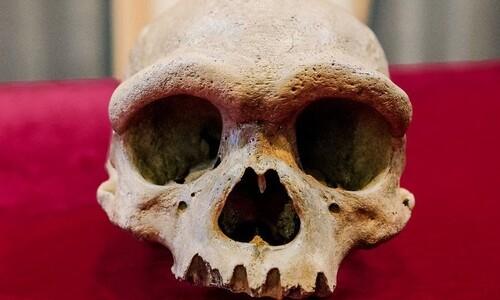 새 '고대 인류' 호모 롱기…중국서 14만6천년 전 두개골 발견