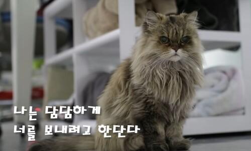 올해 28살 국내 최장수 고양이 '밍키' 고양이별로
