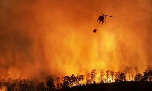 산불 연기에 노출되면 조기출산 위험 높아져