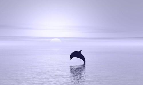 온실가스 이대로 배출하면 세기말까지 바다 기후 95% 변한다