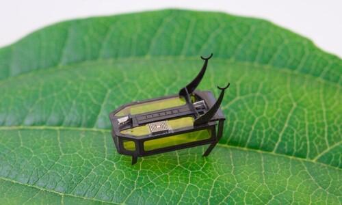 '쌀 3톨' 무게 로봇 딱정벌레, 과연 배터리 품을 수 있나