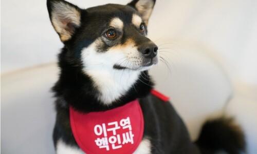 '사연 있는 개' 드라마는 그만…유기견도 그냥 개다