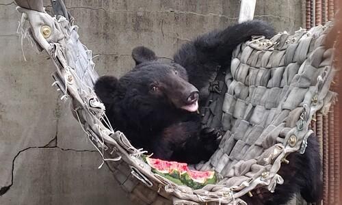 '곰 이름을 불러줘~' 화천 사육곰 이름짓기 공모