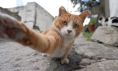 곧 무너질 철거촌…'살고 싶다' 꿈꾸는 고양이가 있다