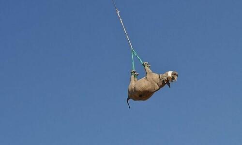코뿔소를 옮기는 가장 좋은 방법은?