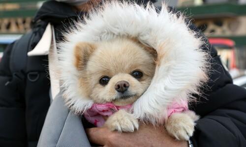 따뜻하게…날이 추운 '개'