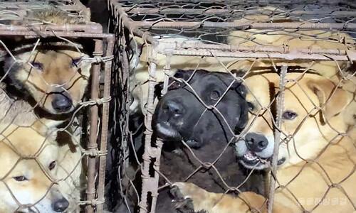 '불법 도살' 여주 도살장 개들은 왜 일부만 구출됐나