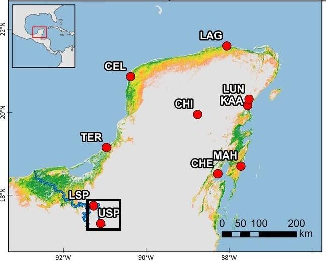 Ubicación de un bosque de manglar interior en la Península de Yucatán en Centroamérica (entre LSP y USP en el recuadro).  Octavia aburto-oropisa y col.  (2021) Atribución de PNAS.