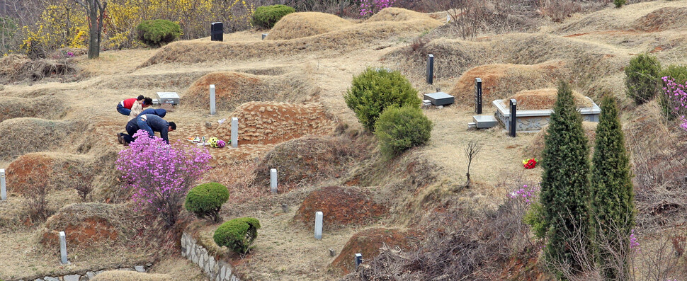 Although there are artificial interventions such as mowing once or twice a year, occasional weed control and spraying of herbicides, there is a special plant in the grave that only survives there.  Paju / Senior Reporter Lee Jeong-yong lee312@hani.co.kr