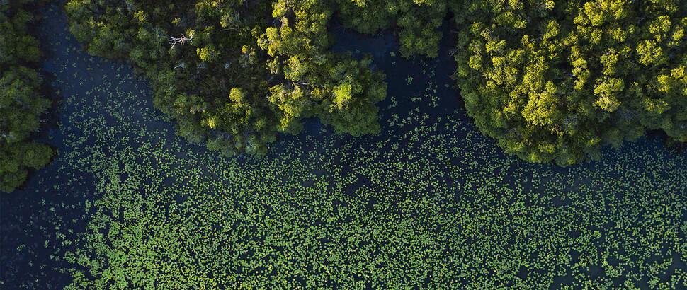 Vista panorámica del río San Pedro en Tabasco, México.  La tala a gran escala está en curso en todas las llanuras excepto en los humedales ribereños.  Atribución de Octavia Aburto-Oropisa.